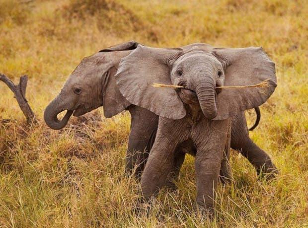 happy-animals10