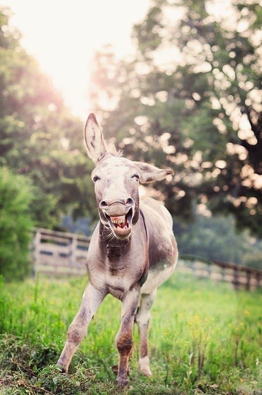 happy-animals19
