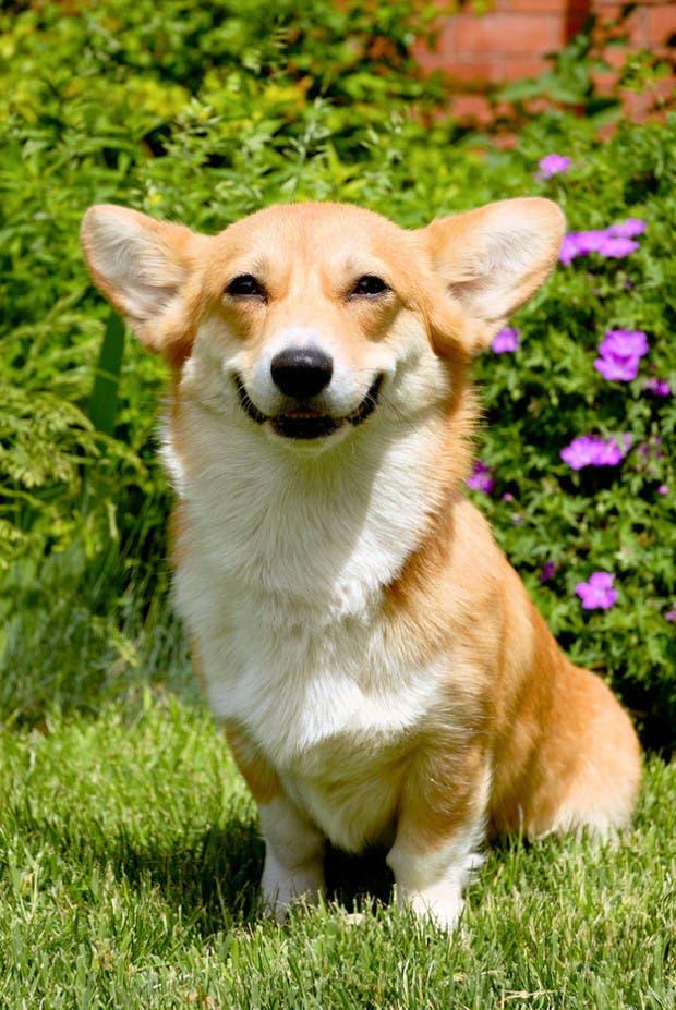 happy-animals3
