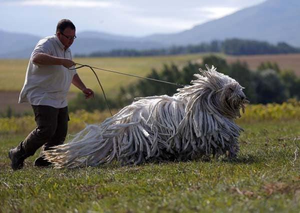 hungary-dog2