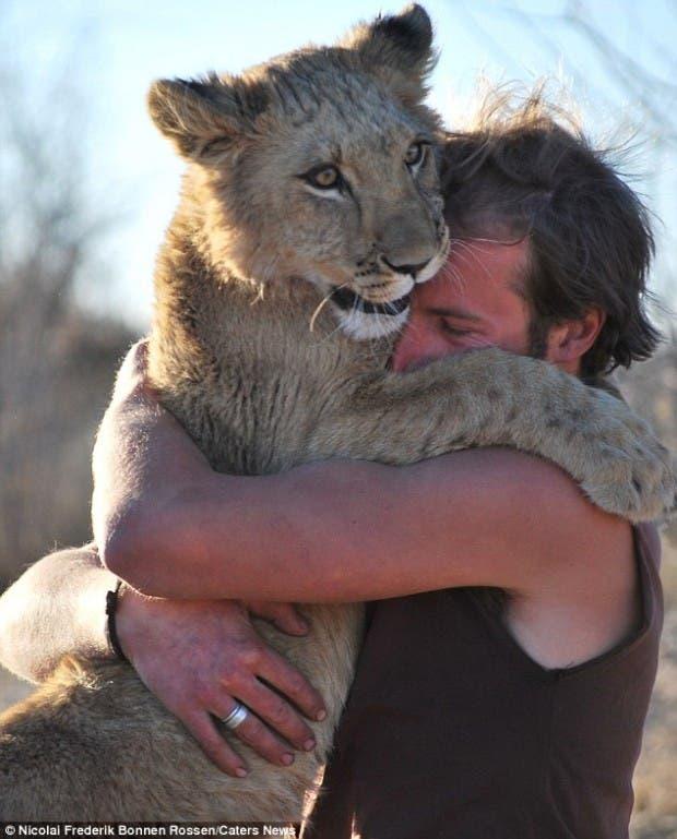 lion-hugs11