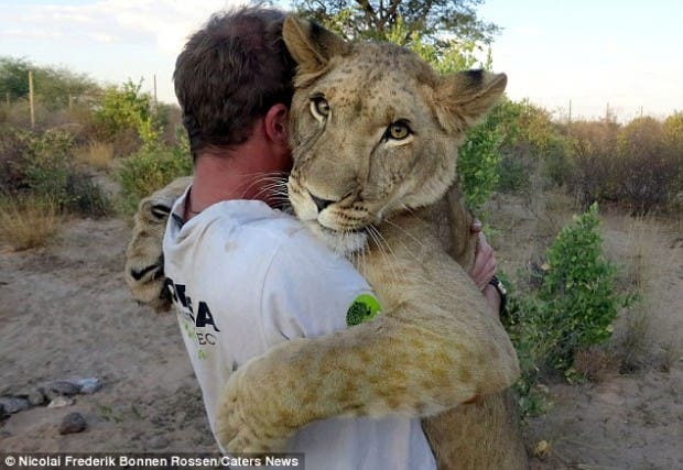 lion-hugs2