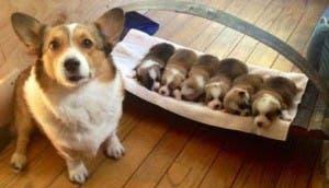 mama-orgullosa-cachorros