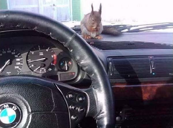 officer-squirrel2