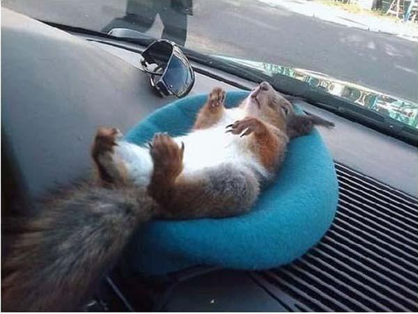 officer-squirrel3