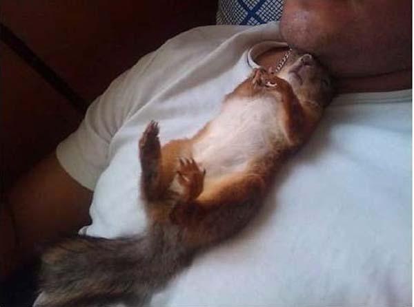 officer-squirrel8