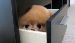 perrito-asoma-armario