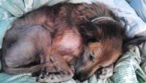 perro-abandonado-bear