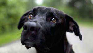 perro-negro-triste