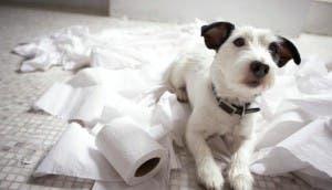 perro-papel-higienico