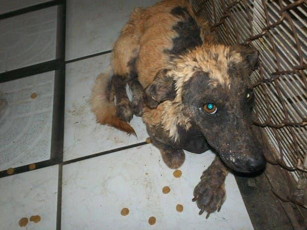 rescued-dog-9