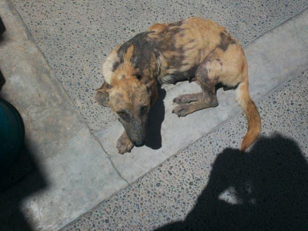 rescued-dog2