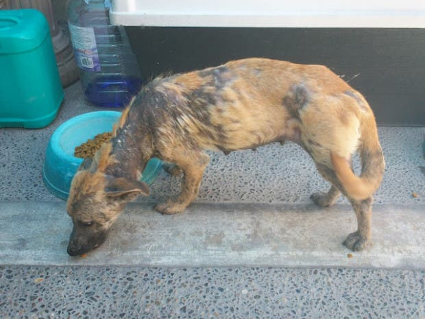rescued-dog4