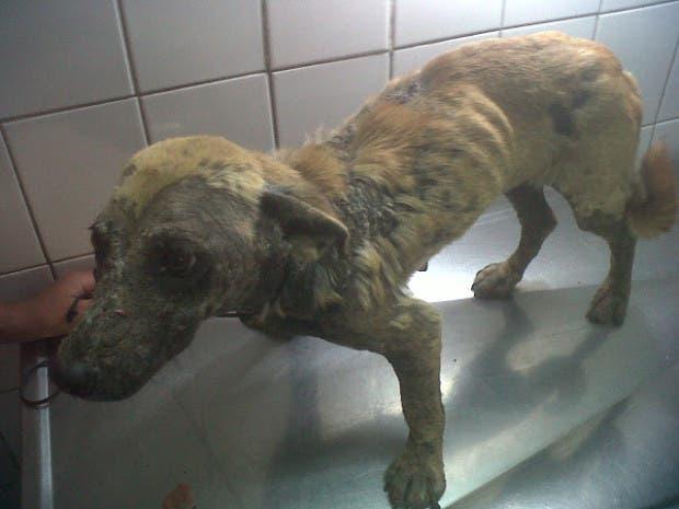 rescued-dog5