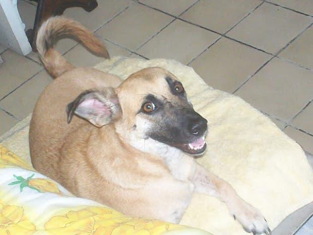 rescued-dog7