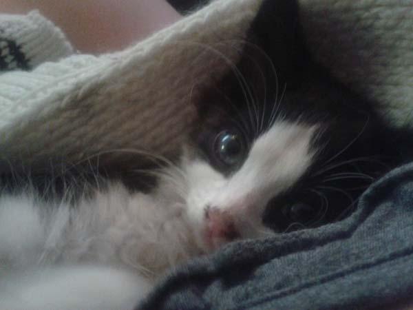 stray-kitten7