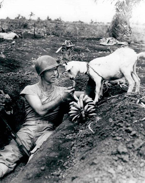 16-Soldier-shares-a-banana-with-a-goat-during-the-battle-of-Saipan-ca-1944