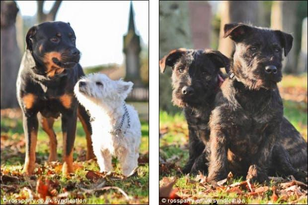 Terrier y Rottweiler 2