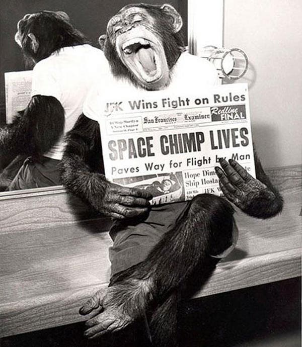 36-A-space-chimp-posing-to-camera-after-a-successful-mission-to-space-1961