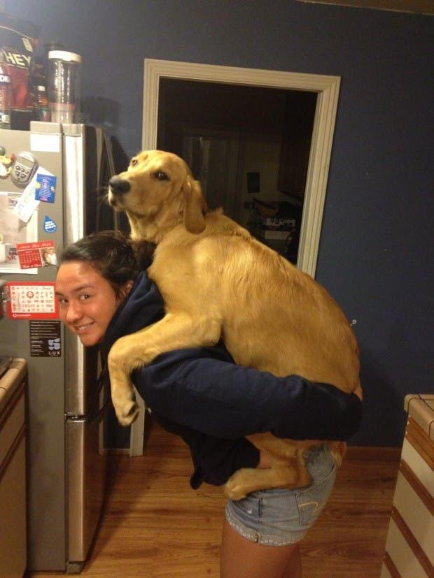 perros grandes 3