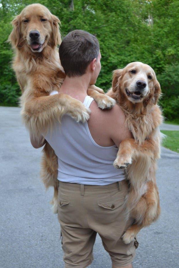perros grandes 6