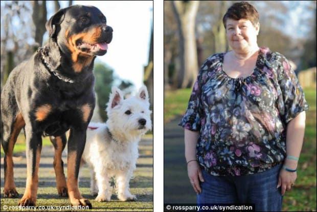 Terrier y Rottweiler 4
