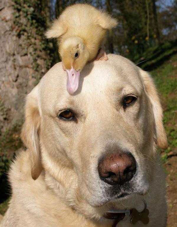 animal-friends-10