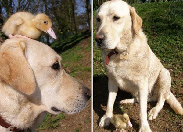 animal-friends-11