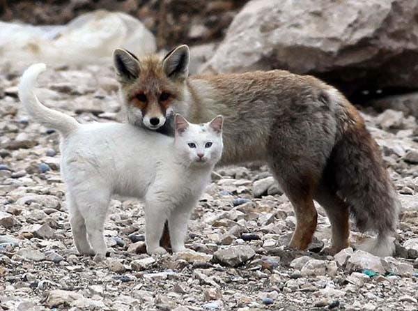animal-friends-17