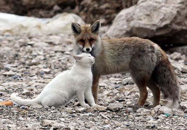 animal-friends-19