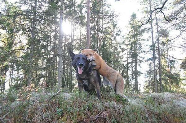 animal-friends-2
