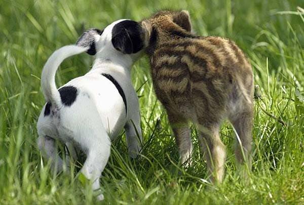animal-friends-22