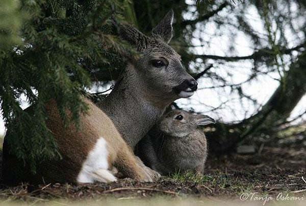 animal-friends-24