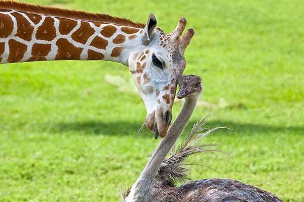 animal-friends-26