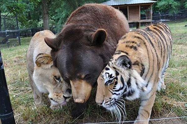 animal-friends-31