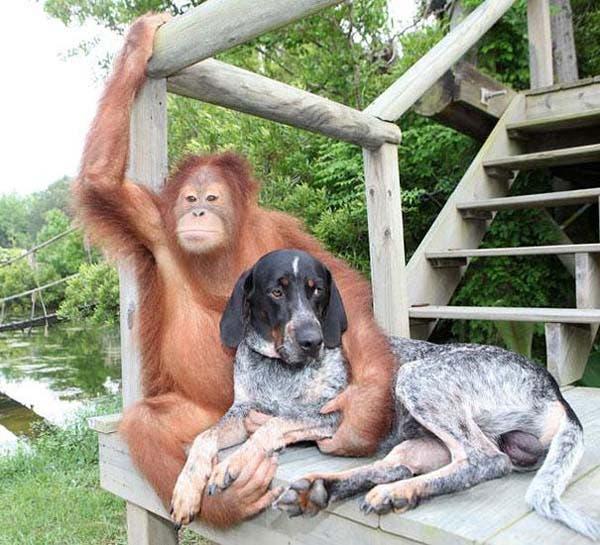 animal-friends-35