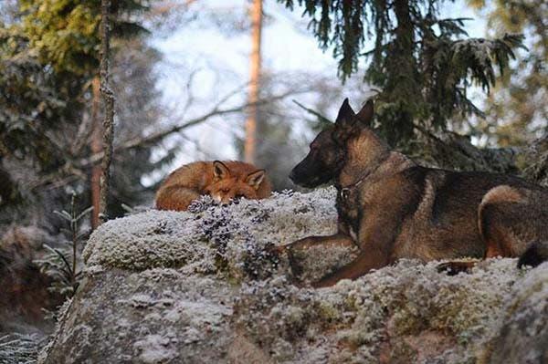 animal-friends-4