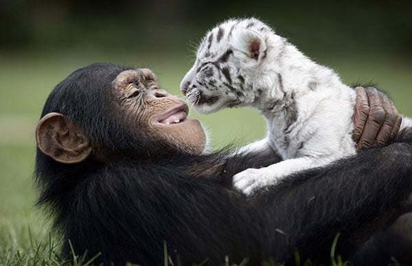 animal-friends-40