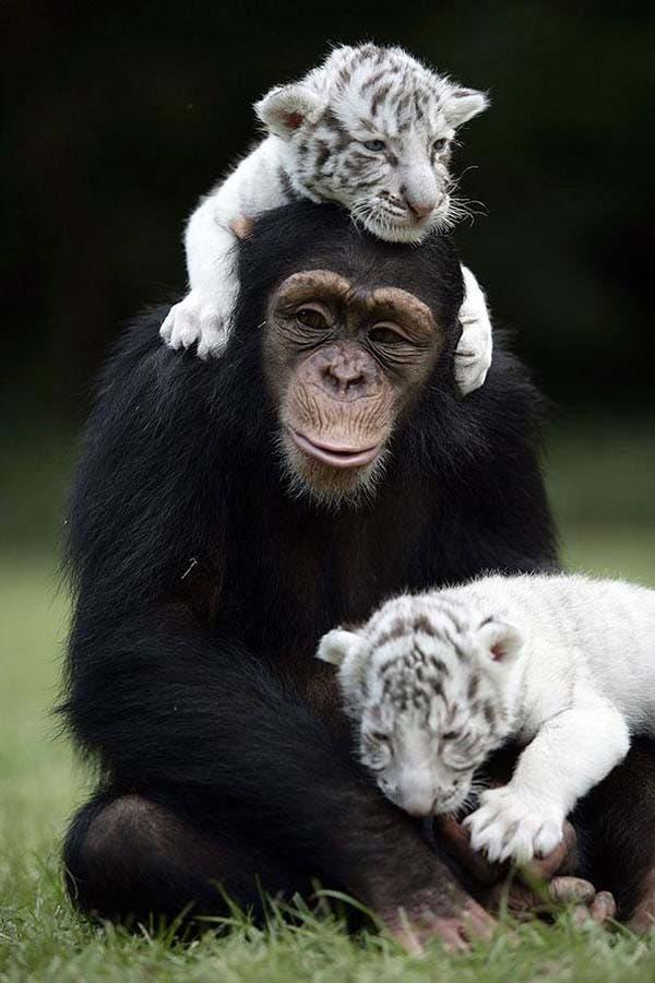 animal-friends-41