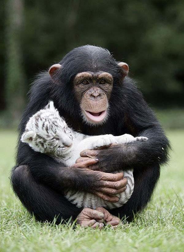animal-friends-43