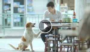 anuncio-tailandes-hombre-perro-play