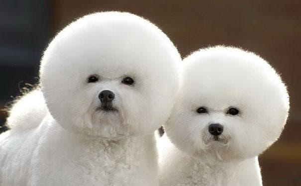 cute-fluffy-animals-24