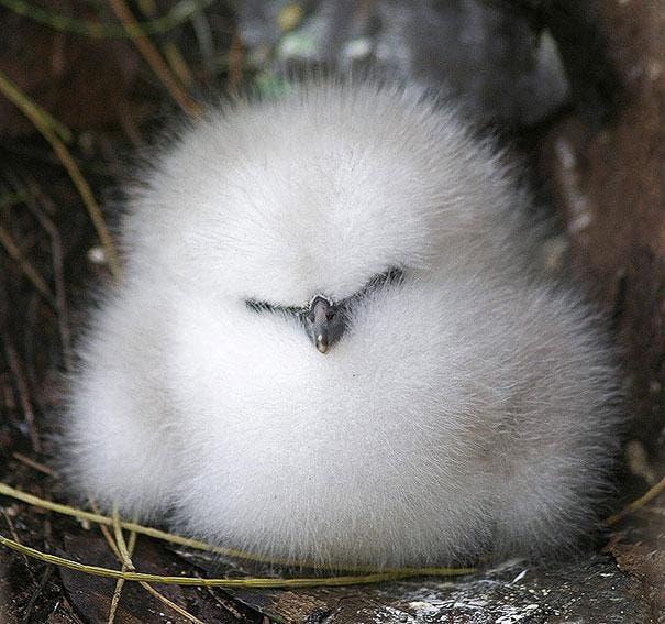 cute-fluffy-animals-25