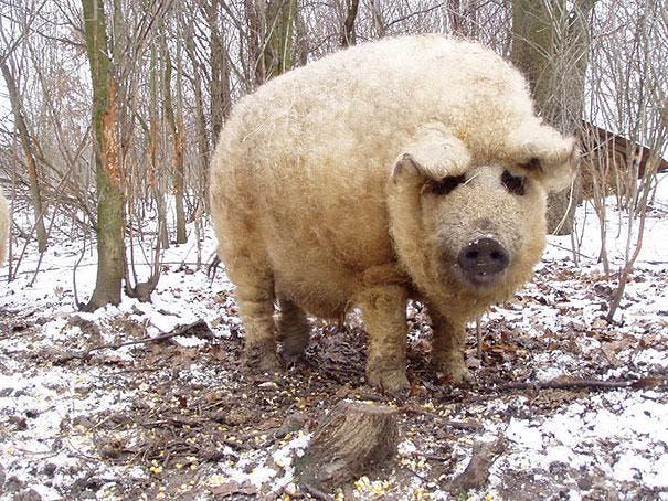cute-fluffy-animals-30