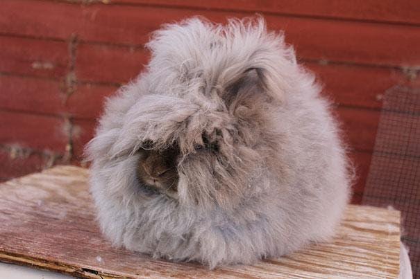 cute-fluffy-animals-34