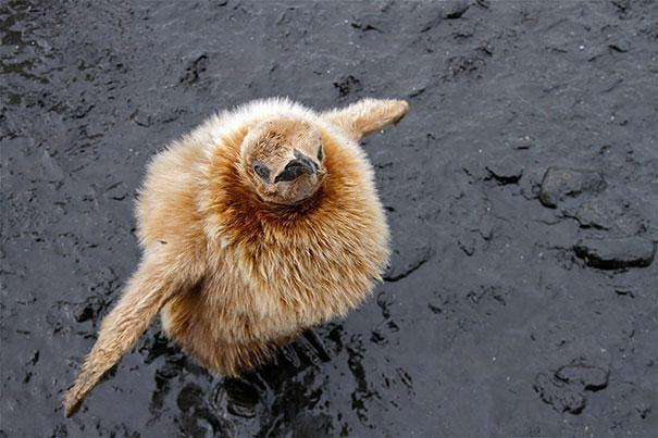 cute-fluffy-animals-35