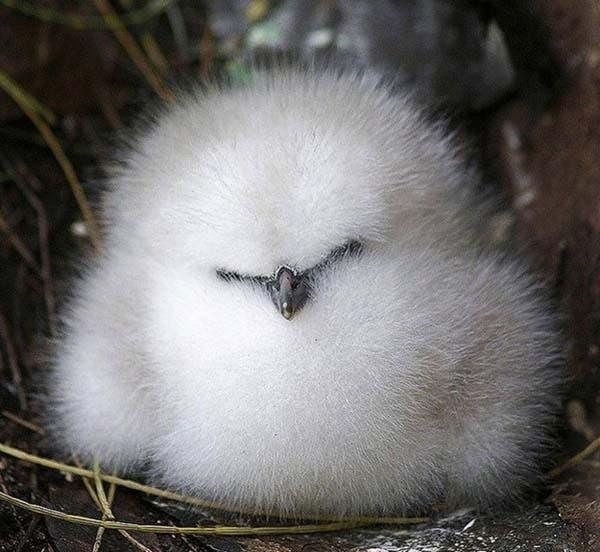 fluffy8