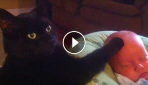 gato-negro-calma-bebe-play