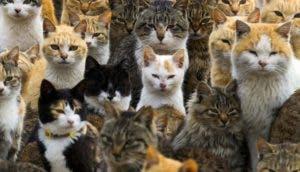 gatos-isla-ahoshima