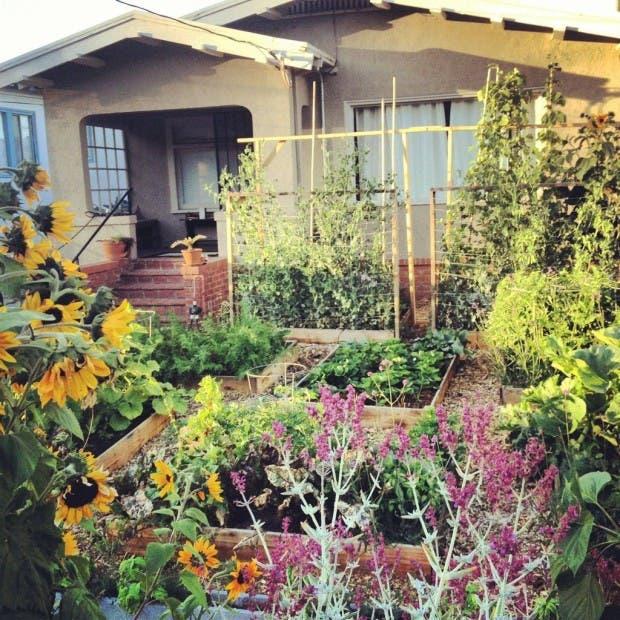 huerto jardín 31